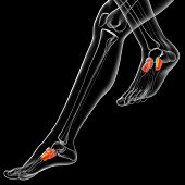 3D Render Medical Illustration Of The Midfoot Bone