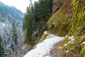 Snow Covered Forest Narrow Hiking Trail