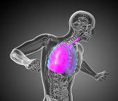 3D Render Medical Illustration Of The Respiratory System