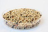 Organic Seed Mixes For Birds