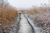 Boardwalk With Frozen Reeds