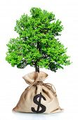 Green tree in bag with a dollar sign isolated on white