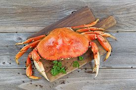 image of cooked crab  - Top view of a steamed Dungeness crab on wooden server board with herbs and spices ready to eat - JPG