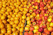 pic of clementine-orange  - Clementines and apples for sale at a market - JPG
