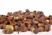 foto of acorn  - A pile of acorns isolated on a white background - JPG