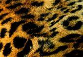 Wild Leopard Background Texture