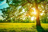 Summer Sunny Forest Trees And Green Grass. Nature Wood Sunlight poster