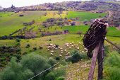 foto of barbed wire fence  - View of a herd of sheep grazing in the sicilian countryside - JPG
