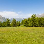stock photo of italian alps  - Wonderful view on Italian Alps with a forest background during a summer day - JPG