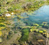 image of swamps  - bog swamp in a meadow in la spezia - JPG