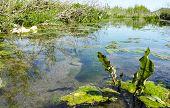 picture of swamps  - bog swamp in a meadow in la spezia - JPG