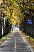 Parisian bicycle lane in autumn