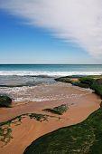 Green Mossy Rocks By Ocean Beach