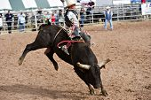 APACHE JUNCTION, AZ - FEBRUARY 27: A cowboy rides a bucking bull in the bull riding competition at t