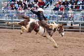 APACHE JUNCTION, AZ - FEBRUARY 27: A cowboy rides a bucking horse in the saddle bronc competition at