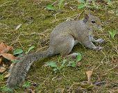 Camosquirrel