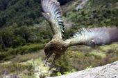 Kea Snap Lunch