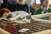 Sad Alone Cat With A Frightened Look, Lying On Cage And Waiting For Their Future Owner poster