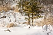 Escenas de invierno