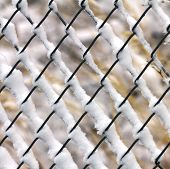 Snow Clinging To A Fence