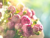 Pink Roses bouquet, blooming roses. Rose flowers bunch in sun light, nature. Holiday gift, Bunch of  poster