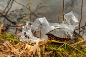 An Eastern Painted Turtle Entangled In A Plastic Six Pack Drink Holder. poster