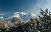Mountain Summit View Through Tree Winter Landscape Snow Seasonal