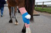 Injured hind leg