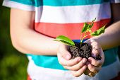 Two Hands Of The Children Are Planting The Seedlings Into The Soil. poster