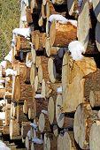 Wood pile snowed
