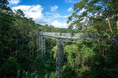 Canopy Walkway At The Impressive Queen Sirikit Botanic Gardens In The Mountains. It Has Also Now Bee poster