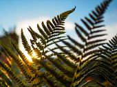Perfect Natural Fern. Beautiful Background Made With Young Green Leaves Of A Fern. Tropical Fern. Co poster