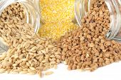 Gläser mit Getreide (Hafer, Mais Grütze, Buchweizen)