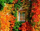 Autumnal Window