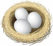 huevos de nido