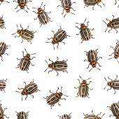 Seamless Texture - Colorado Beetle On A White