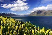 Lake Hawea Lavender