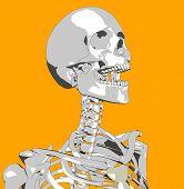 Bone 124