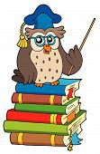 Owl_Teacher_Standing_On_Pile