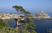 Pine over the sea.