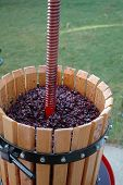 stock photo of wine-press  - wine press filled with grapes - JPG