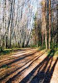 Wood Road. Autumn. Russia.