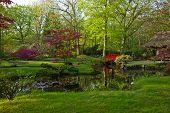 Japanese garden in spring