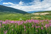 Wild Flowers Summer Mountain Landscape