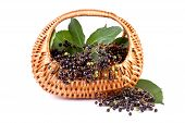 elderberry in basket isolated on white background