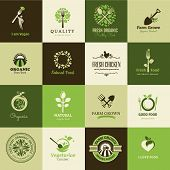 image of tree leaves  - Set of different vector icons for organic food and restaurants - JPG