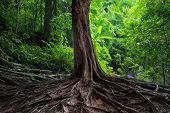 Old tree with big roots in green jungle forest