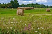 hay bales with wildflowers