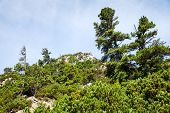 Stones And Young Pine Trees On The Slopes Of The High Tatras