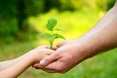 Father's and son's hands holding green growing plant over nature background. New life, spring and ec